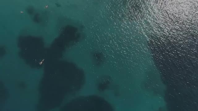 Swimming In The Sea: Stock Video