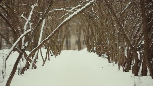 Mystical Winter Alley: Stock Video