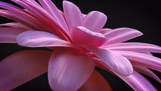 Flower Elegant Logo Reveal: After Effects Templates