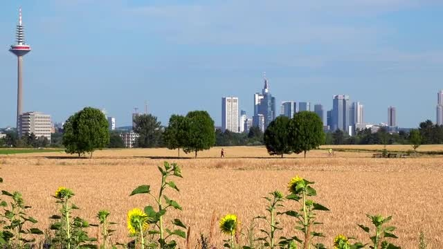 Frankfurt View And Field: Stock Video