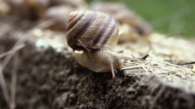 Snail Crawling On Concrete: Stock Video