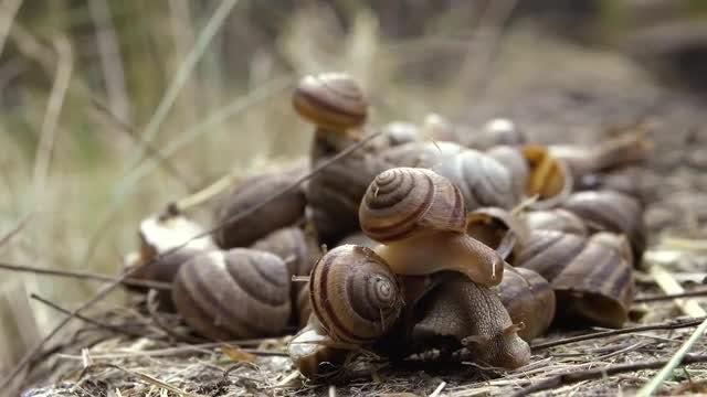 Many Snails Close Up: Stock Video