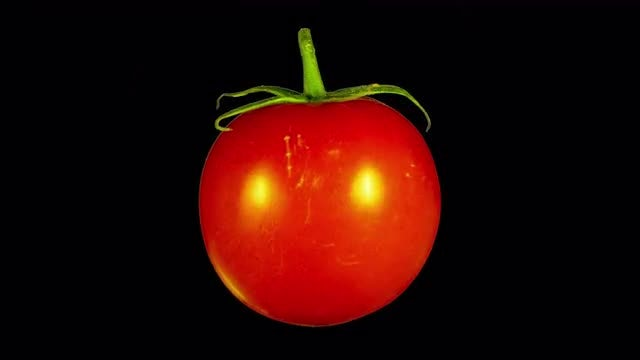 Isolated Tomato Rotating: Stock Video