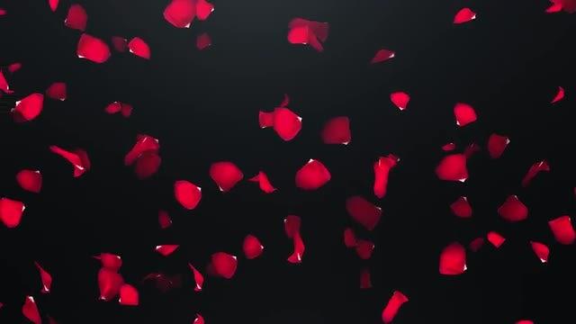 Fyling Petals: Stock Motion Graphics