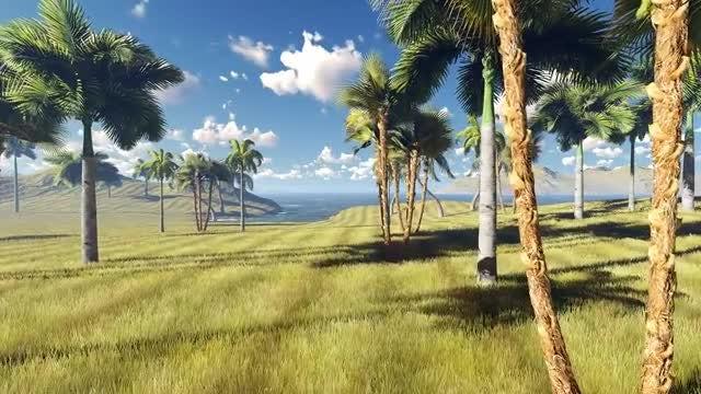 Palms Garden: Stock Motion Graphics