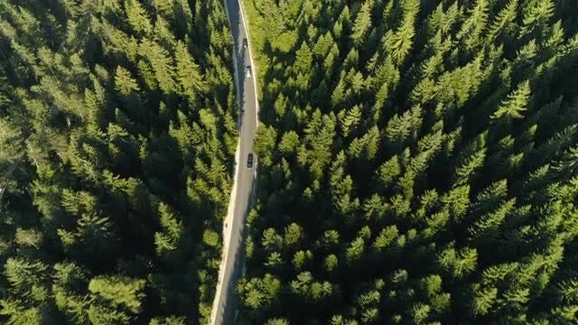 Road In Forest Landscape: Stock Video
