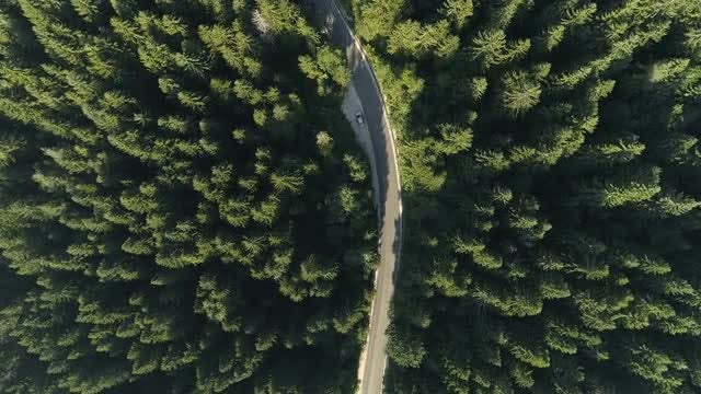 Driving Through Forest: Stock Video