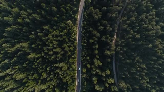 Forest Road Aerial: Stock Video