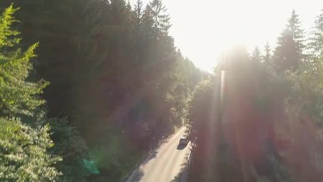 Sunlight Over Forest Road: Stock Video