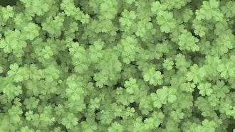 Four Leaf Clover Background: Motion Graphics