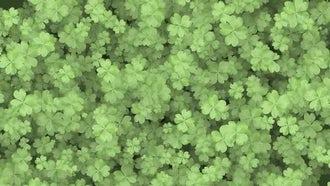 Four Leaf Clover Background: Motion Graphics