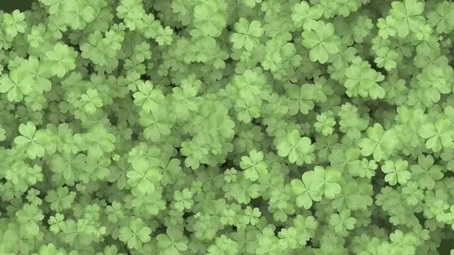 Four Leaf Clover Background: Stock Motion Graphics