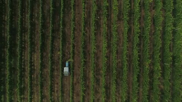 Tractor In Vineyard Top View: Stock Video