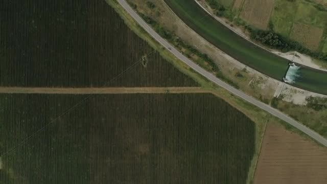 Vineyard Aerial: Stock Video