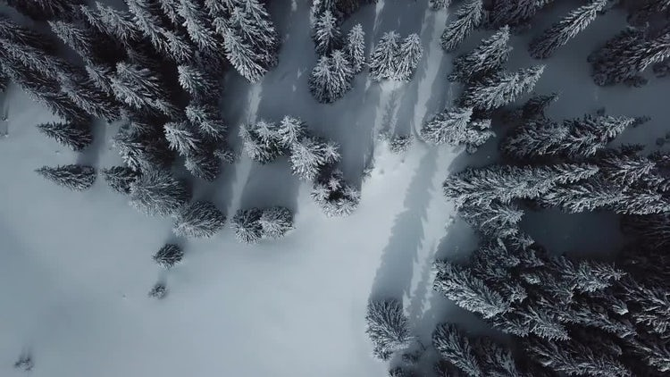 Snow-Covered Forest: Stock Video