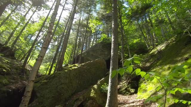 Sun Shining In The Woods: Stock Video