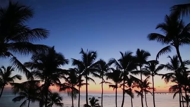 Tropical Sunrise: Stock Video
