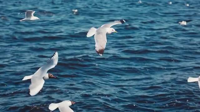Seagulls Close-Up: Stock Video