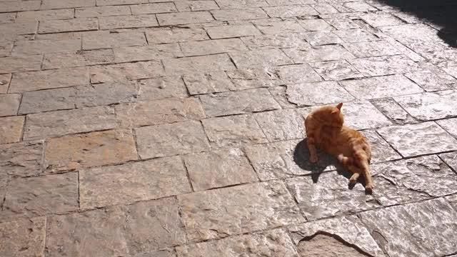 Ginger Cat Bathing: Stock Video