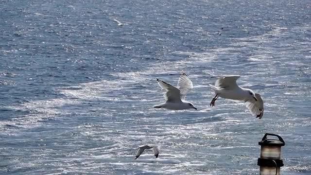 Seagull Landing On Lamp: Stock Video