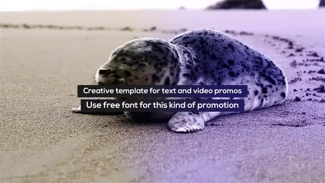 Stomp Typo Promo: After Effects Templates