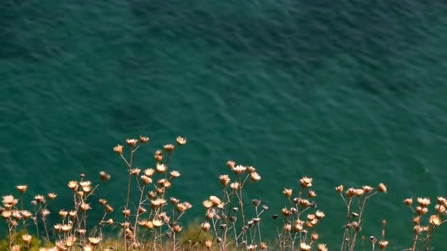 Flowers By The Sea: Stock Video