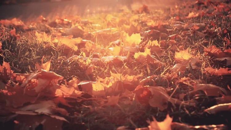 Autumn Leaves: Stock Video