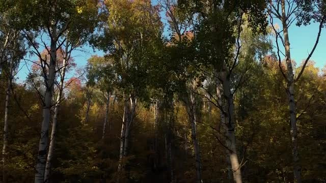 In The Autumn Forest: Stock Video