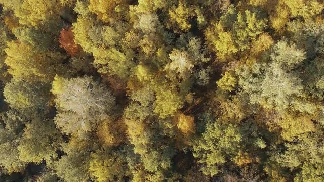 Autumn Tree Tops: Stock Video