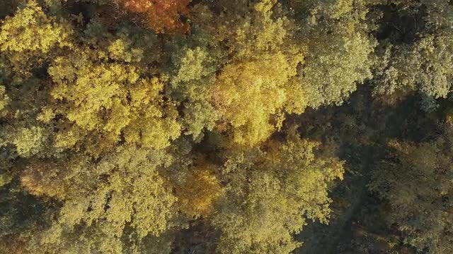 Above The Autumn Forest: Stock Video