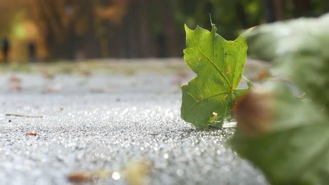Fallen Leaves: Stock Video