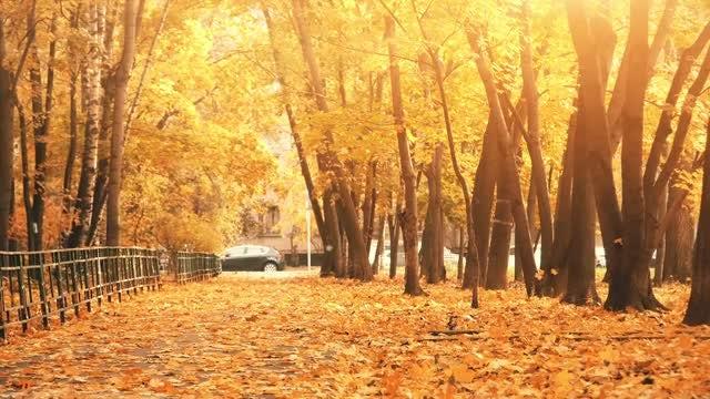 Park In Autumn: Stock Video