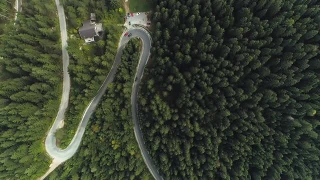 Winding Forest Road: Stock Video