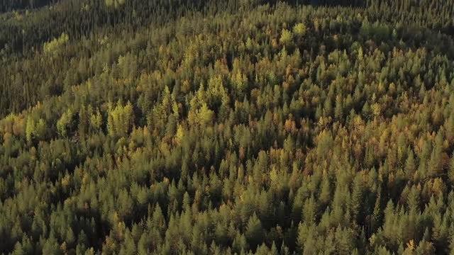 Autumn: Stock Video