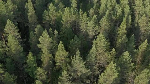 Forest Aerial: Stock Video