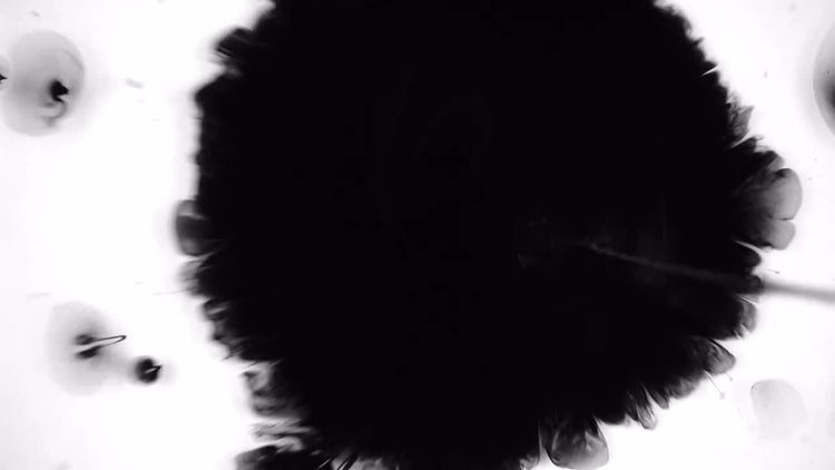 Black Ink Drops: Stock Video