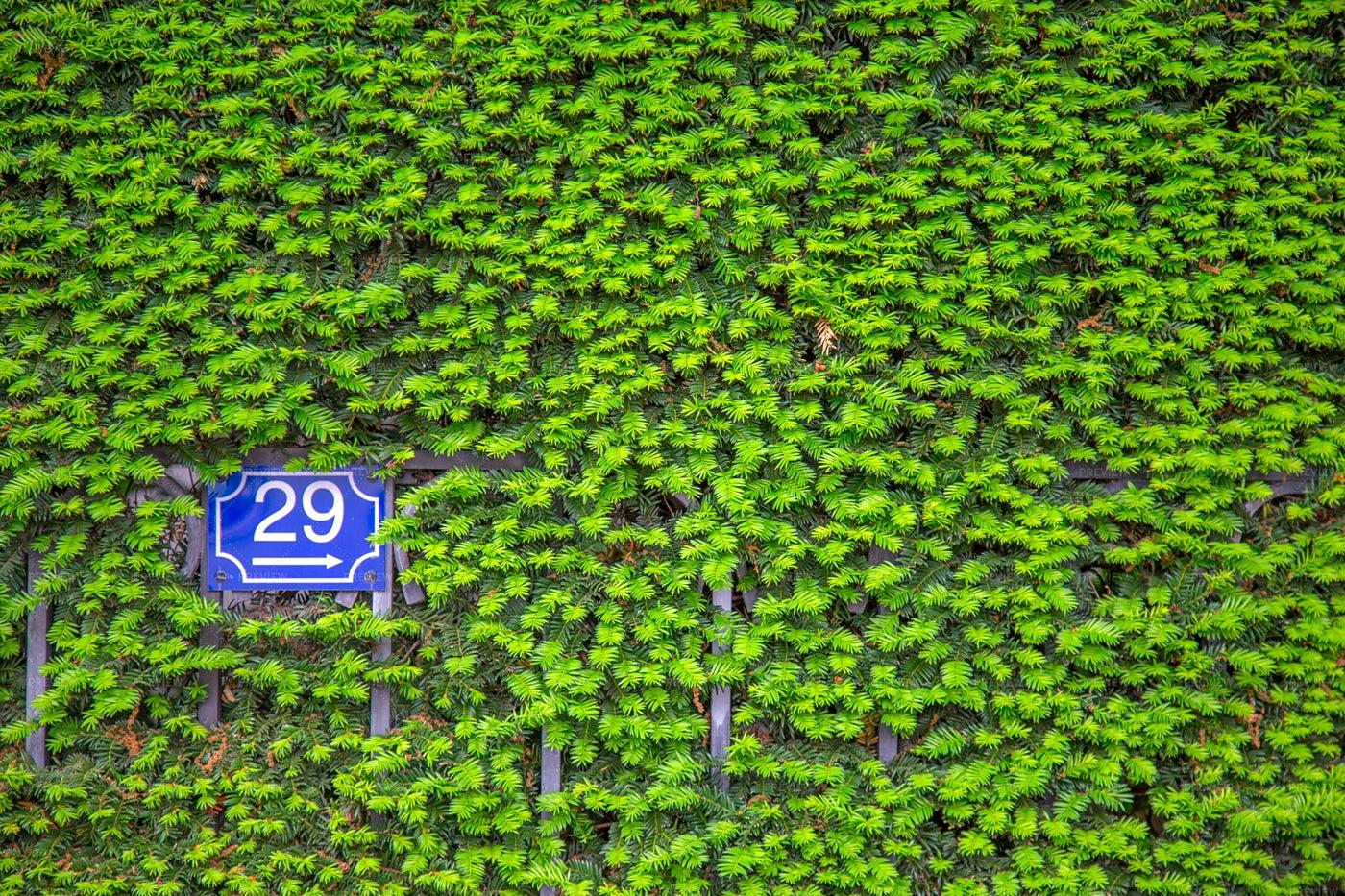 Overgrown Wall Shows Sign: Stock Photos
