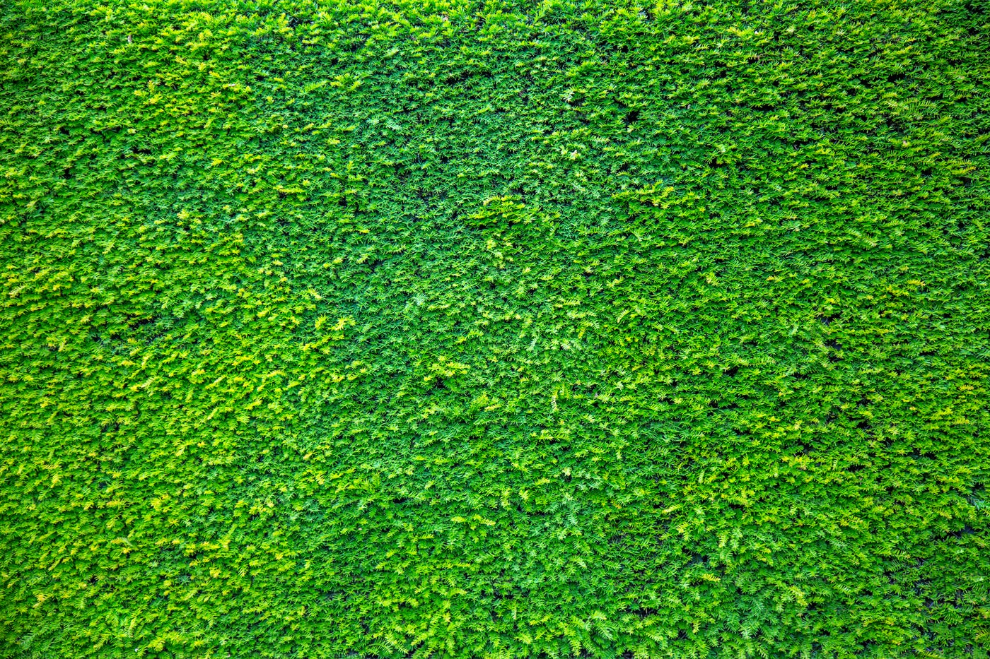 Background Of Green Branches: Stock Photos