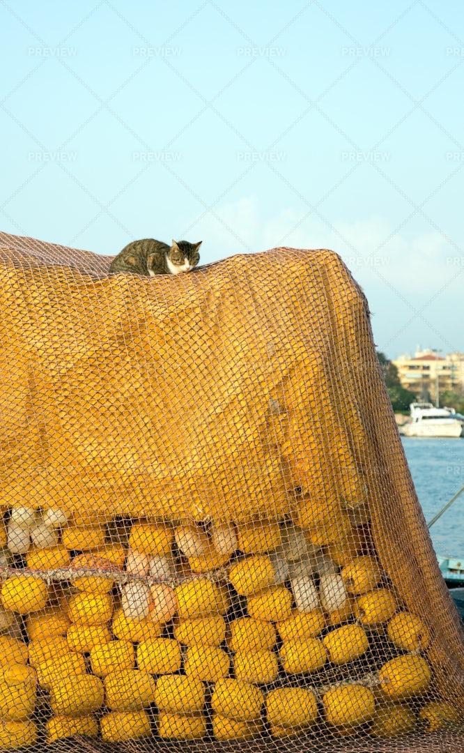Cat Ontop Of Fishing Equipment: Stock Photos
