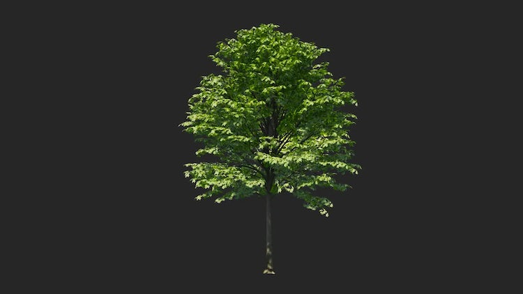 Tree Collection: Stock Motion Graphics