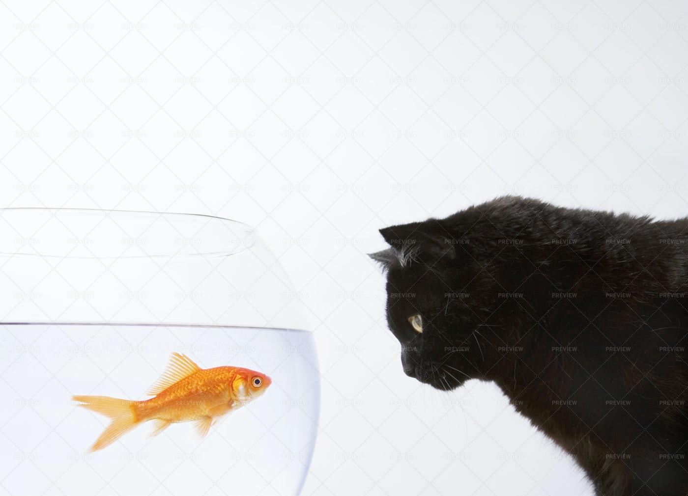 Cat Staring At A Goldfish: Stock Photos