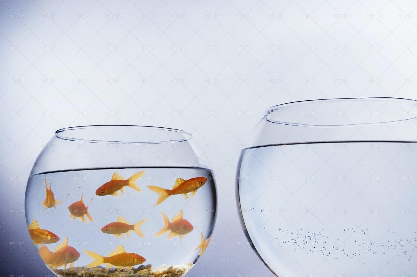 Goldfish In A Bowl: Stock Photos