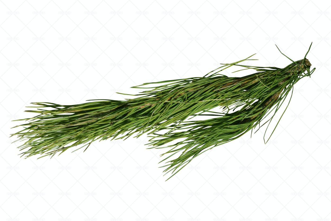 Green Pine Branch: Stock Photos