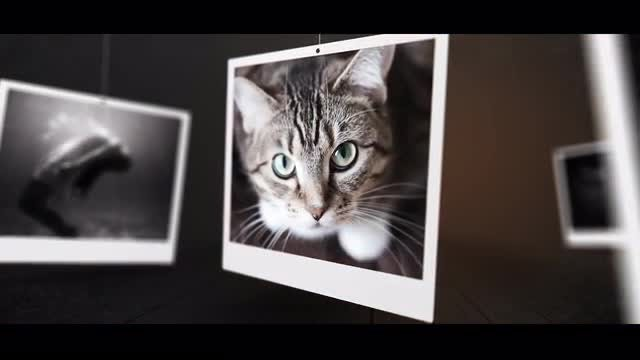 Poly Slides: After Effects Templates
