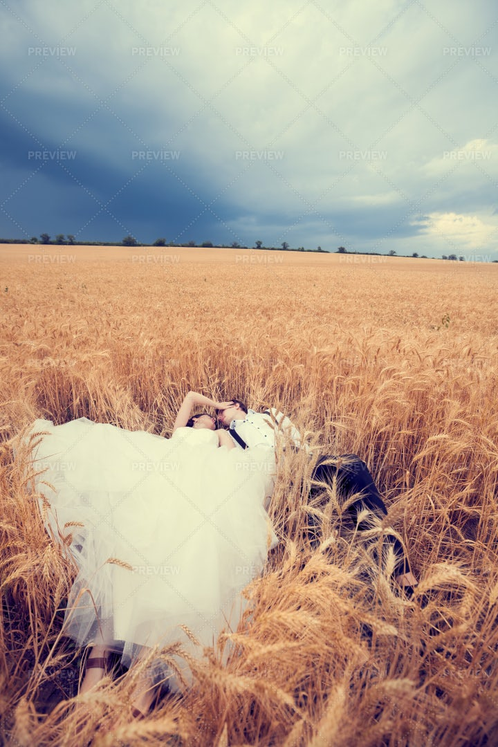 Wedding Photography In A Wheat Field: Stock Photos