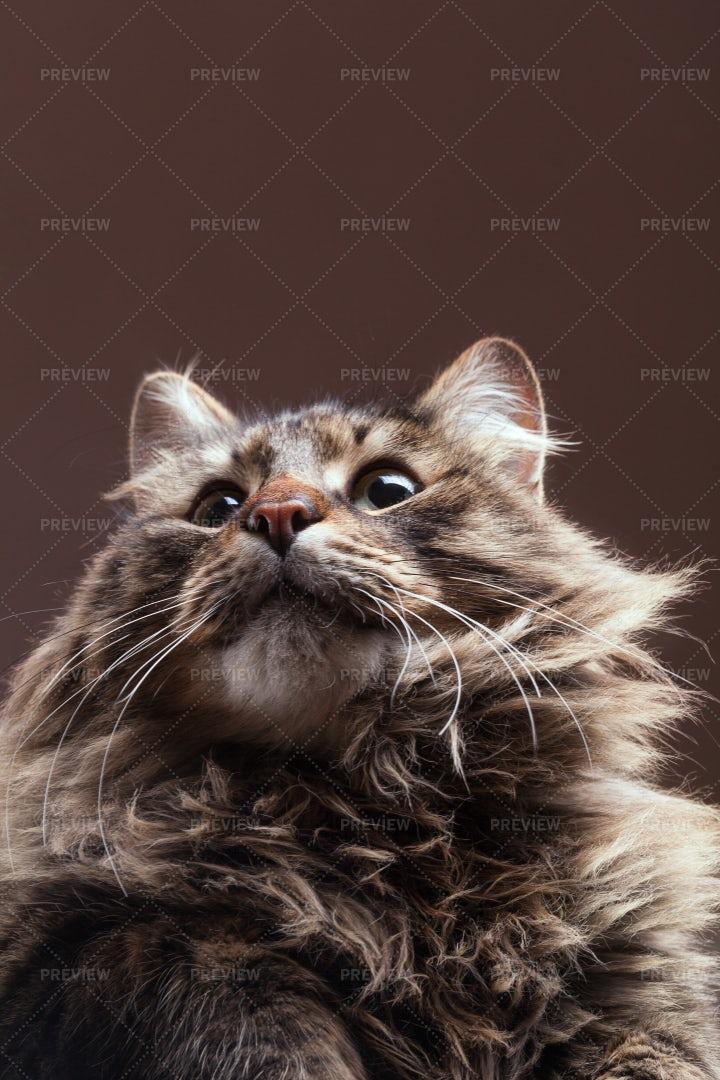 Cat Looking Up: Stock Photos