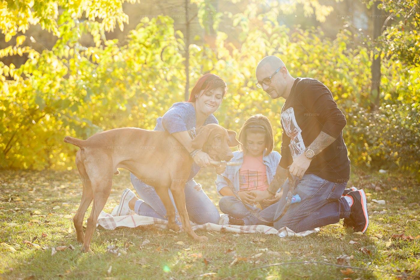 A Family Picnic: Stock Photos