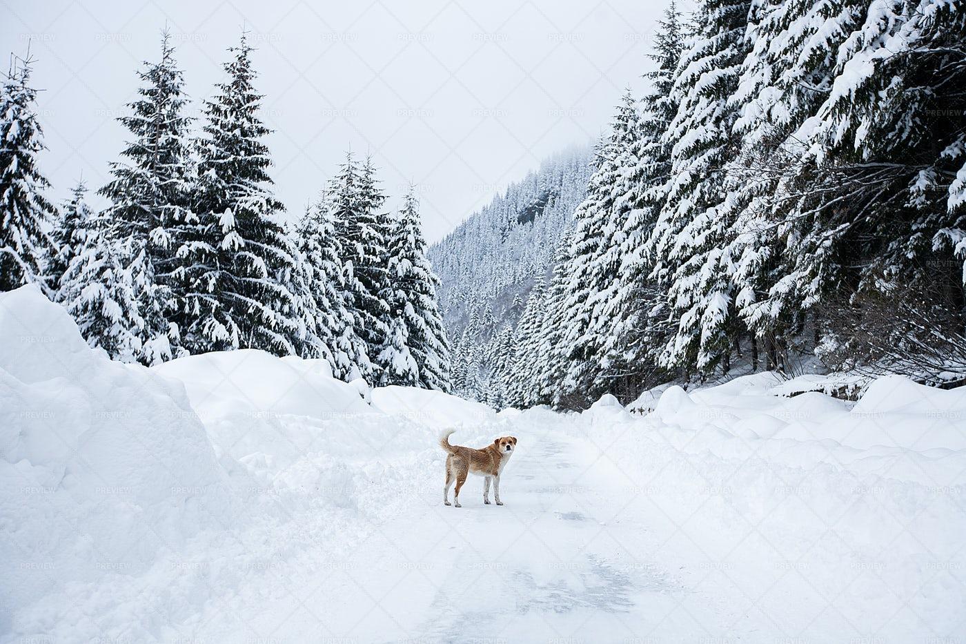 Winter And Dog: Stock Photos