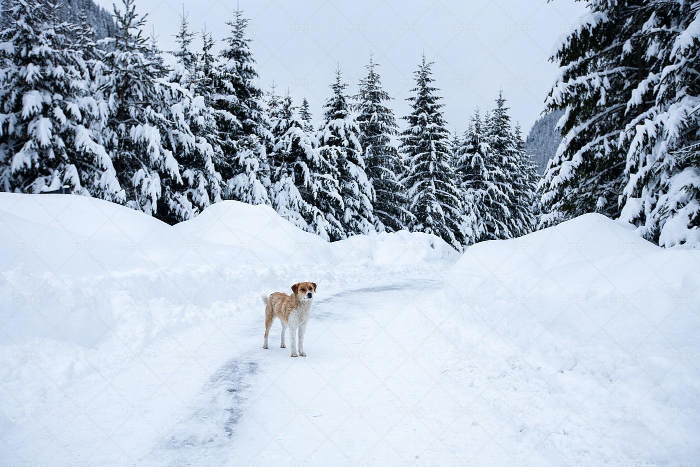 Dog And Wonderland Landscape: Stock Photos