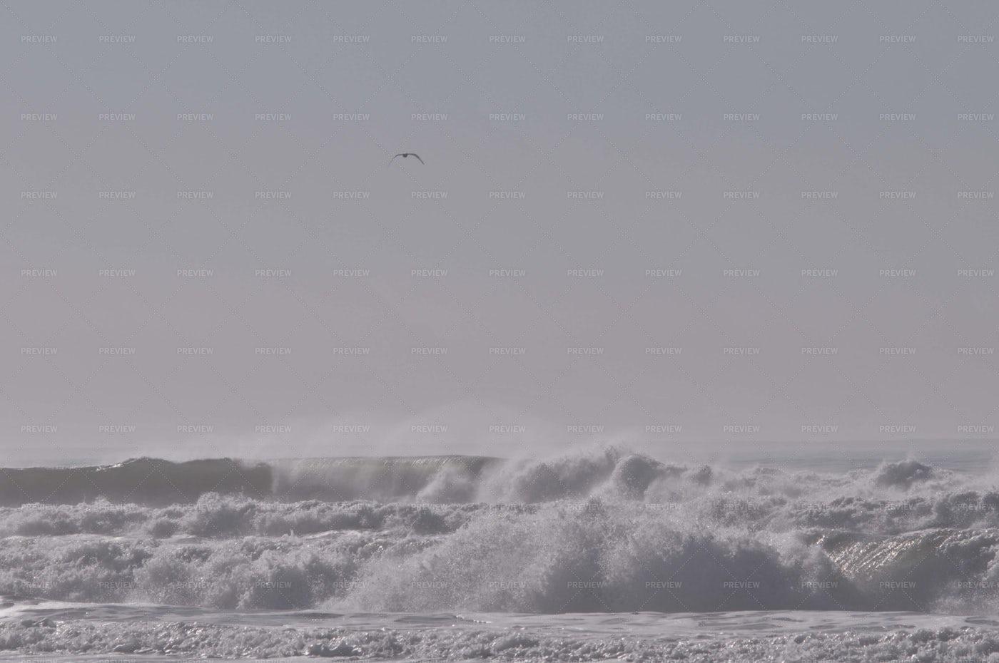 Seagull Over Ocean Waves: Stock Photos